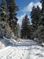 Kirnbergsee im Winter_12